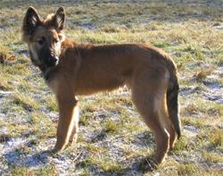 schilddrüsenunterfunktion symptome beim hund